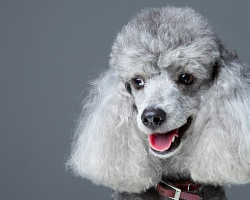 Broadway Dog Grooming
